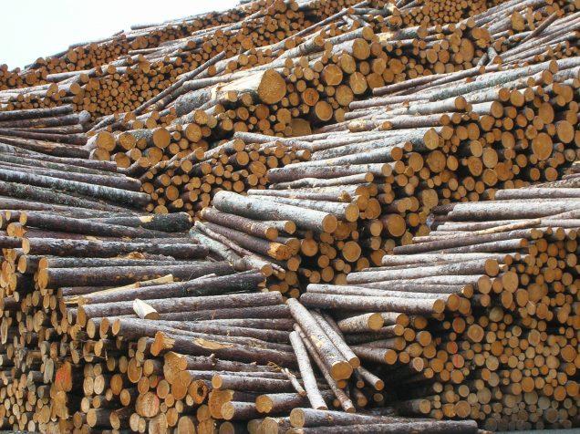 Logging Harvest-2534404231