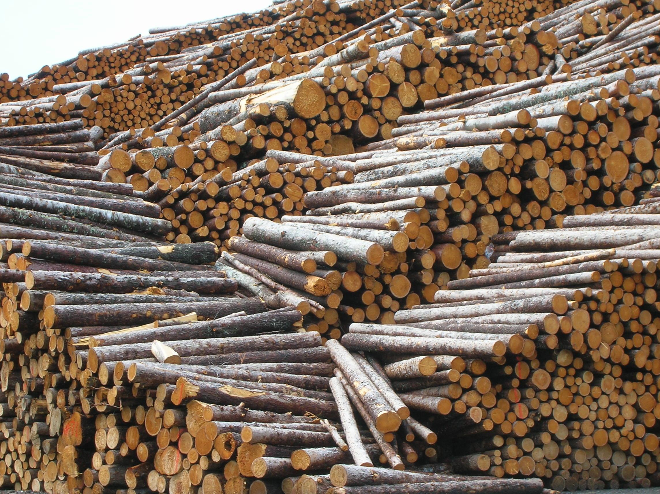 מחסן עצים רחובות