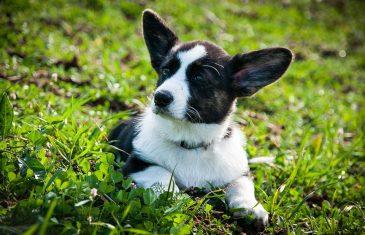 בחירת מעון יום לכלבים: מחירים, בטיחות ושירותים